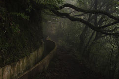 Levada Madeira royalty free stock photography