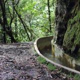 Levada nella foresta sempreverde dell'alloro sul Madera Fotografia Stock