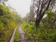 Levada sul Madera Fotografia Stock