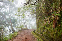 Levada walk through laurel forest on Madeira island, Portugal. Levada walk through laurel forest near Ribeiro Frio on misty foggy day. Popular touristic hiking royalty free stock photos