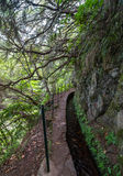 Levada walk in Madeira Royalty Free Stock Photography