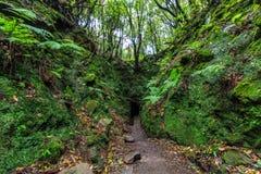 Levada y rastro que camina a través de un túnel en las montañas del th Fotos de archivo