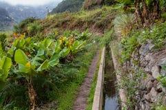 Levadas bei di irrigazione del Madera Immagini Stock Libere da Diritti