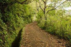 Levadas del canale di irrigazione Foresta tropicale nelle montagne sull'isola del Madera Fotografia Stock Libera da Diritti