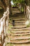 Levadas del canale di irrigazione Foresta tropicale nelle montagne sull'isola del Madera Fotografia Stock
