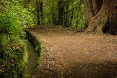 Levadas del canale di irrigazione Foresta tropicale nelle montagne sull'isola del Madera Immagini Stock