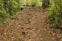 Levadas del canale di irrigazione Foresta tropicale nelle montagne sull'isola del Madera Immagine Stock