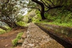 Levadas del canale di irrigazione Foresta tropicale nelle montagne sull'isola del Madera Immagine Stock Libera da Diritti