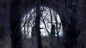 Levande död som går till och med en fullmåne Forest Happy Halloween 4K, kretsar royaltyfri illustrationer