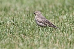 Levande dödfågel Royaltyfri Fotografi