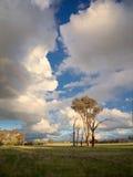 Levande och döda träd och moln Arkivfoto