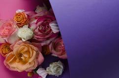 Levande rosram Härlig blom- bakgrunds… bakgrund med färgrika blommor Kortmall som fjädrar ferier med idérikt utrymme för text Royaltyfri Bild