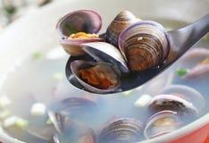 Levande skaldjur för faster fem Arkivfoto