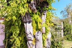 Levande träd Arkivfoton