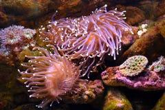 Levande undervattens- korall royaltyfri foto