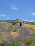 Levander Feld, Provence Stockfoto
