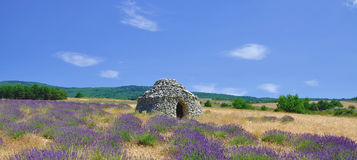 Levander Field,Provence Stock Image