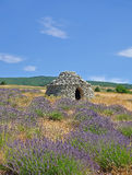 Levander Field,Provence Stock Photo