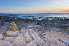 Levantamento do filhote de cachorro Fotografia de Stock