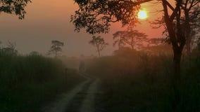 levantamiento del sol y bosque del helecho de la humedad imagenes de archivo