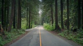 Levantamiento para arriba sobre el camino a través de bosque del verano almacen de video