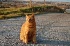 Levantando o gato Imagem de Stock Royalty Free