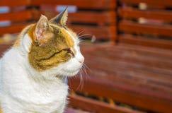 Levantando o gato Fotos de Stock Royalty Free