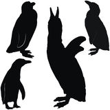 Levantando pinguins Imagens de Stock