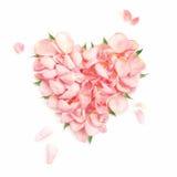 Levantar-pétalas do coração Foto de Stock Royalty Free
