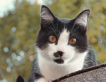 Levante el gato que se sienta en nuestro tejado Imagen de archivo