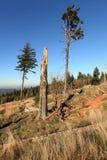 Levarsi in piedi dei due alberi Fotografia Stock Libera da Diritti