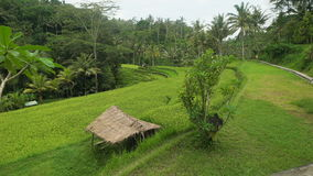 Level green hill surrounded by tropical jungle. Stone paved pedestrian path along the rainforest. Small hut with a stock video