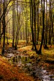 A Quiet Creek in Autumn Forest royalty free stock image