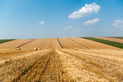 Levels with bales. Levels after the harvest, with bales of straw Royalty Free Stock Photo