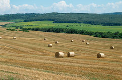 Levels with bales. Bales of straw. Levels after the harvest, with bales of straw Stock Photo