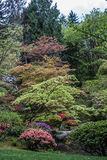 Levels Of Color. Flowering trees in this Seattle garden create rising levels of color Stock Images