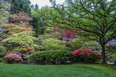 Levels Of Color 3. Flowering trees in this Seattle garden create rising levels of color Stock Image