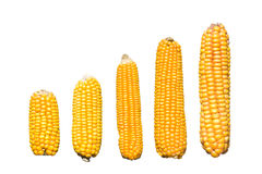 Levels of corn Stock Image