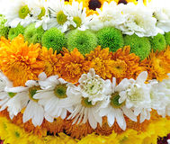 Levels of flowers. Levels of different flowers, can be used as background Royalty Free Stock Photo