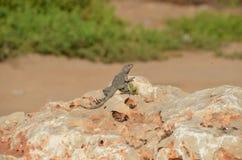 Levende dieren door het strand Royalty-vrije Stock Foto's