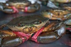 Levende Krabben klaar om bij markt worden gekookt stock afbeeldingen