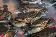 Levende Krabben klaar om bij markt worden gekookt stock fotografie