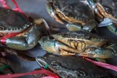 Levende Krabben klaar om bij markt worden gekookt royalty-vrije stock afbeelding