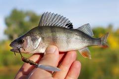 Levende vissen Stock Foto