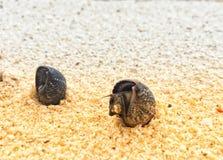 Levende zeeschelp op zand bij kust in de de zomerdag royalty-vrije stock afbeelding