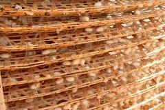 Levende zijderupsen en vele witte cocons in een fabriek Stock Afbeeldingen