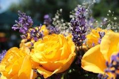 Levender和黄色玫瑰 库存照片