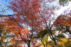Levendig bos op zonnige dag Stock Afbeelding