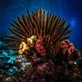 Levendig koraal royalty-vrije stock fotografie