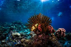 Levendig koraal royalty-vrije stock foto's